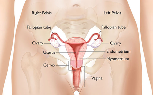 ovarian diagram 1